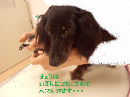 2012072719160000.jpg
