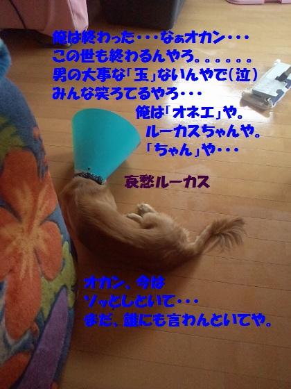 2012081811220001.jpg