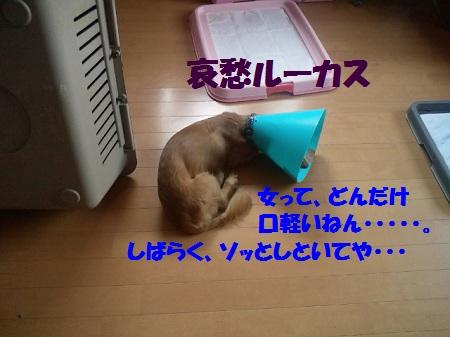 2012081811300000.jpg