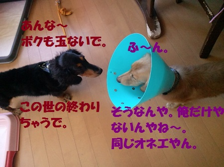 2012081911290001.jpg