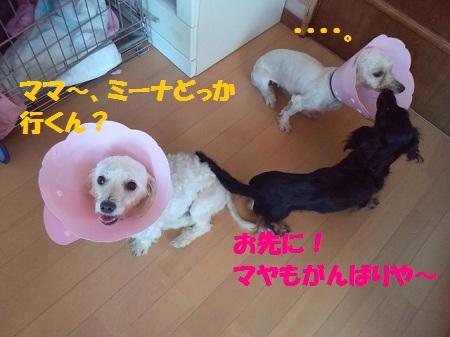 2012081911290002.jpg