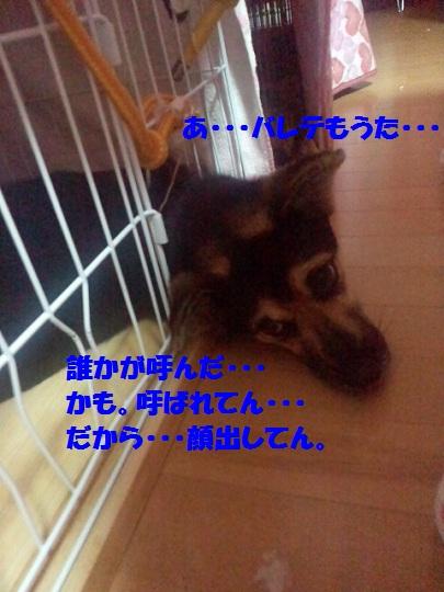 2012090100070002.jpg