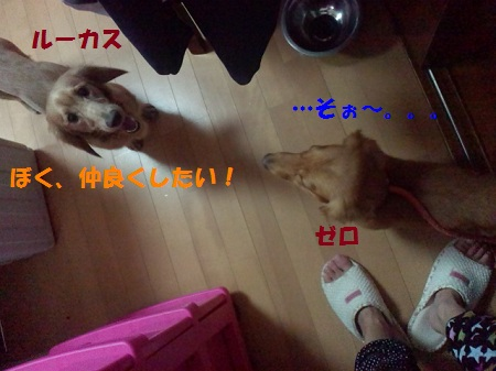2012091817420002.jpg