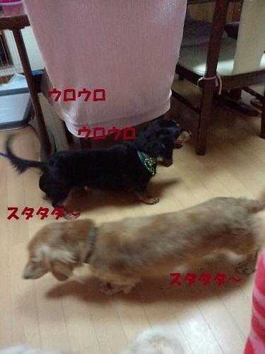2012092019040000.jpg