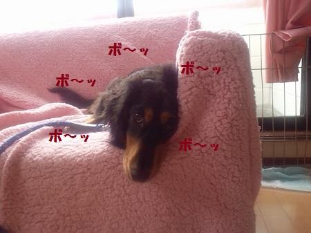 2012092513460001.jpg
