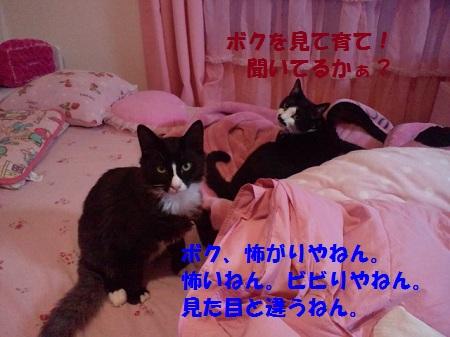 2012092917420000.jpg