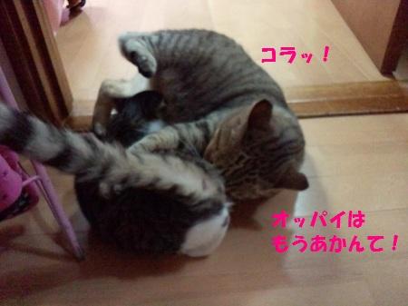 2012092923560001.jpg
