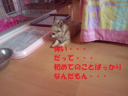 2012101115200001.jpg