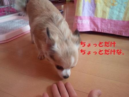 2012101115210000.jpg
