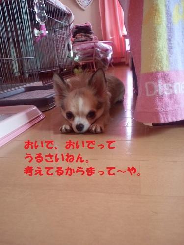 2012101115210002.jpg
