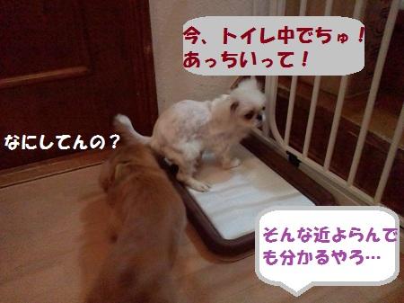 2012101119090000.jpg