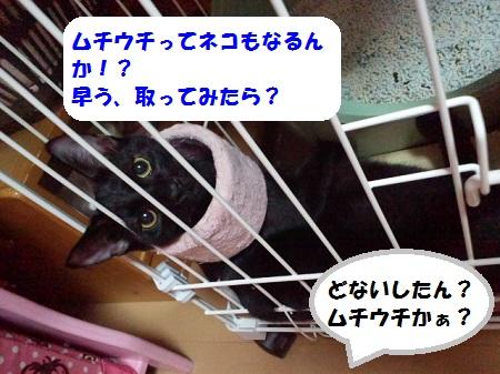 2012101120070000.jpg