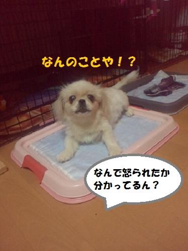 2012102318530001.jpg