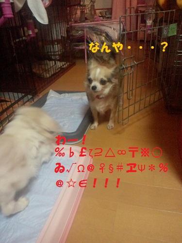 2012102318530003.jpg