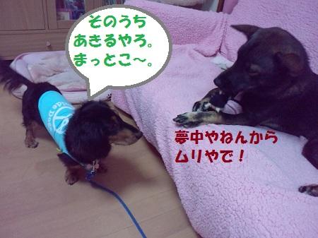 2012102721360002.jpg
