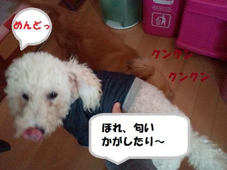 2012103013080002.jpg
