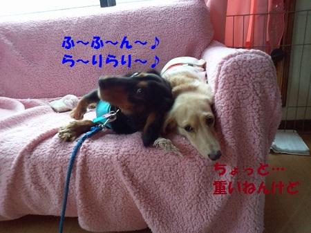 2012103013080003.jpg