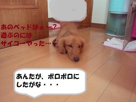 2012110414130001.jpg