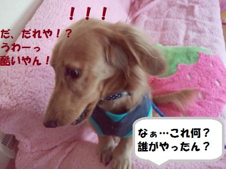 2012110515070002.jpg