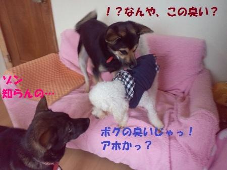 201211061438000100.jpg