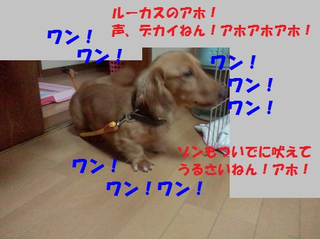 2012110820010003.jpg