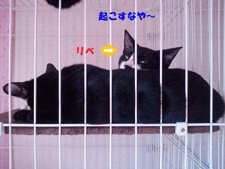 2012110913270000.jpg