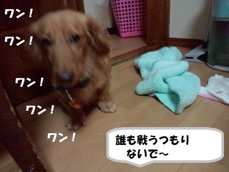 2012111116070003.jpg