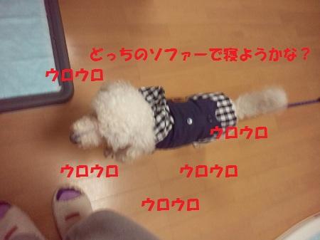2012111116120001.jpg