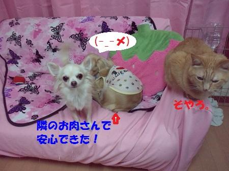 2012111800290000.jpg