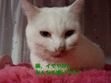 2012111800590000.jpg