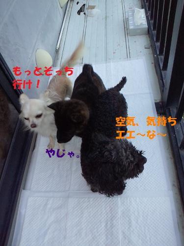2012111815470001.jpg