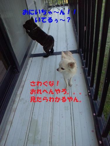 2012111815490000.jpg