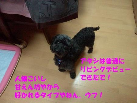 2012111800290001 - コピー