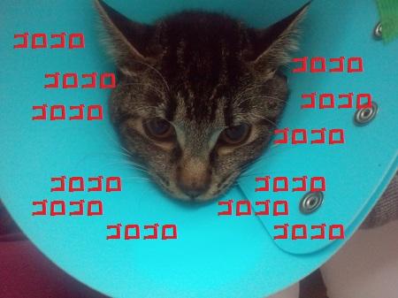 2012120418520001.jpg
