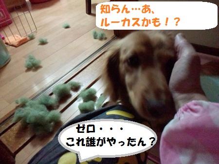 2012120520410001.jpg