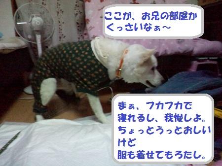 2012121301050001.jpg