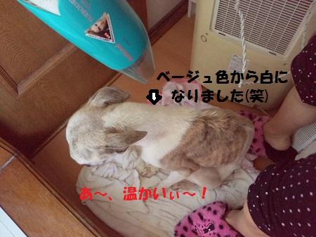2012122012460000.jpg