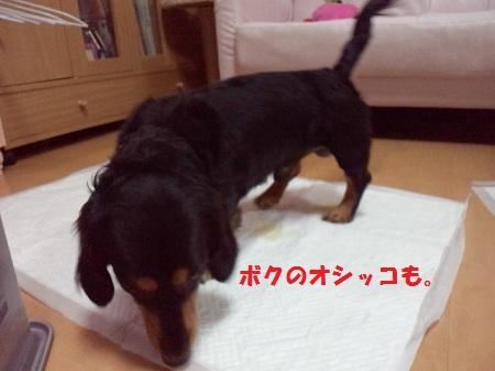 2013010403180001.jpg