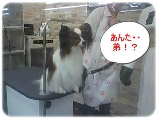 028_20121012122824.jpg