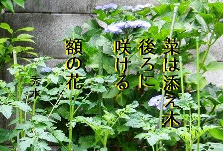 gaku001.jpg