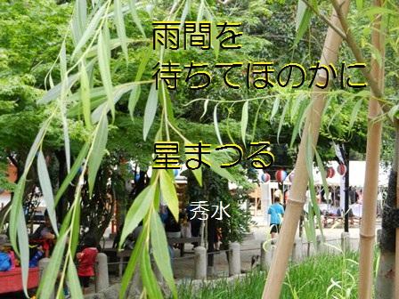 hoshimatsuru.jpg