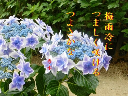 tsuyubie011.jpg