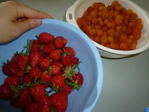 イチゴとイエローラズベリー