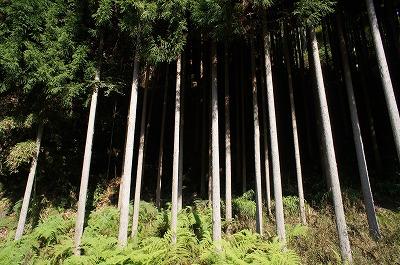 京都神護寺2 022