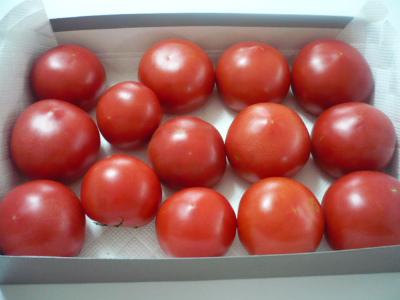 自家トマト