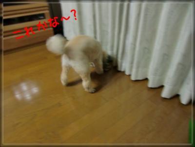 k2fZCsbwCvvGTtc_1350030408_mj_convert_20121012173532.jpg