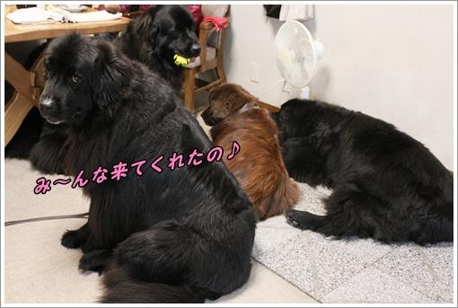 20141103___MG_4574.jpg