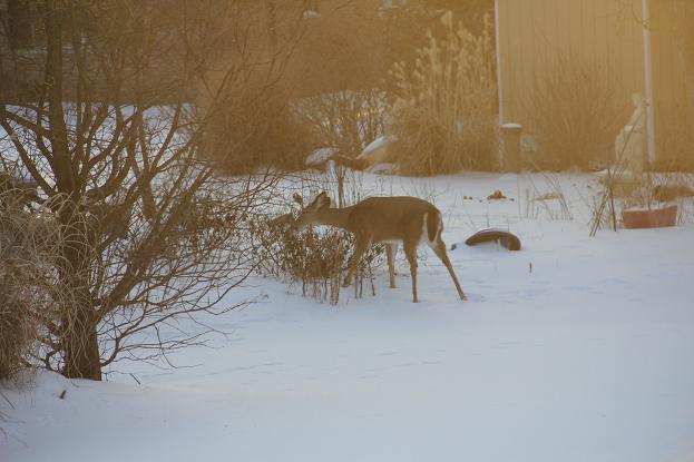 deer5.jpg