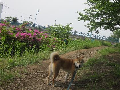 20125砂5