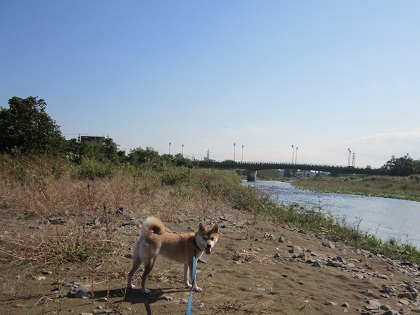 201210川1